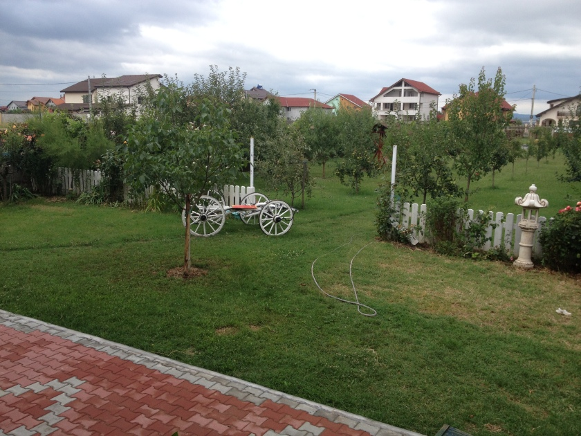 A view of Pastor Rica's orchard